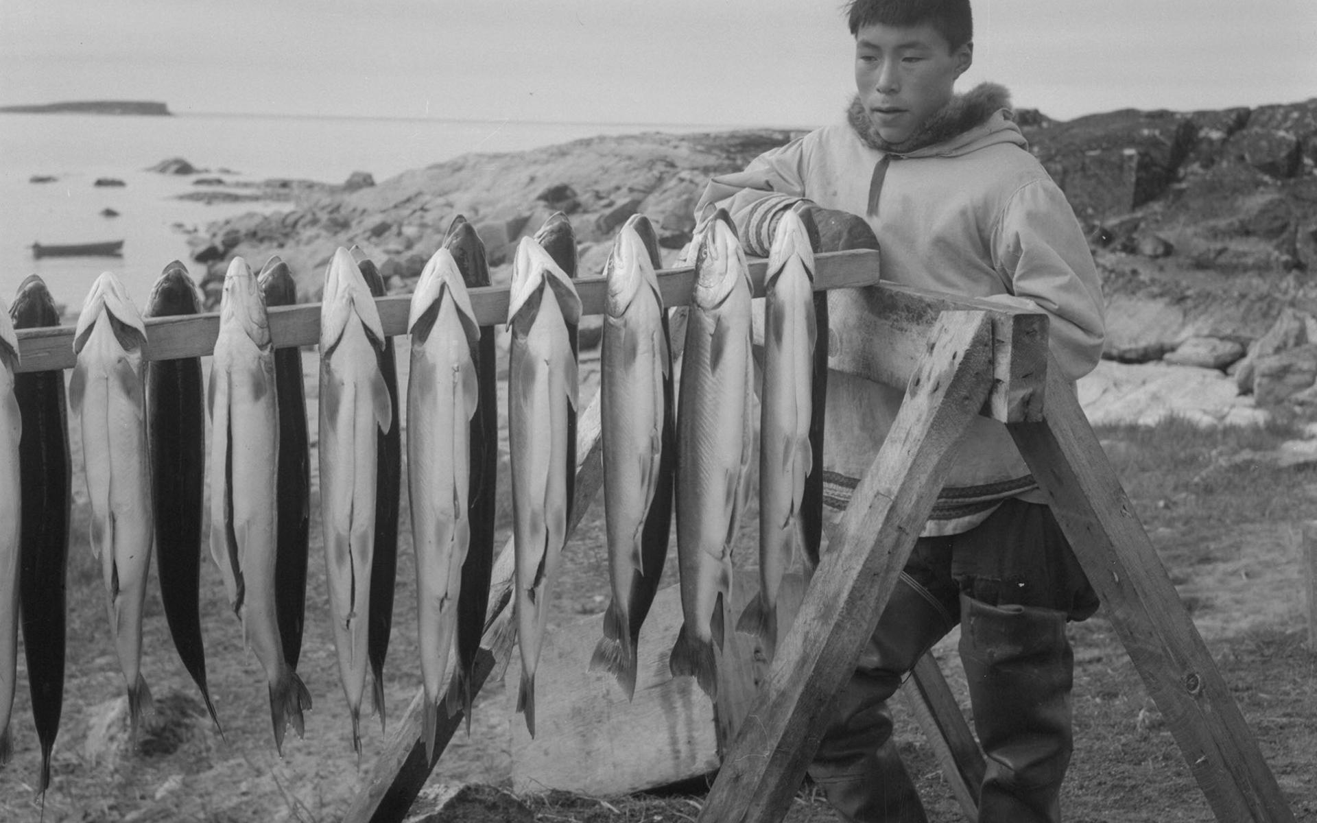 Inuk debout à côté d'une claie de séchage d'ombles de l'Arctique